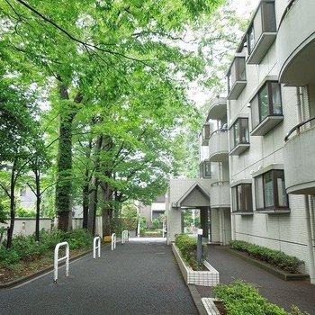 こんな緑あふれるマンションが駅徒歩3分!