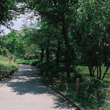 【おまけ】緑道が心地良いのです。