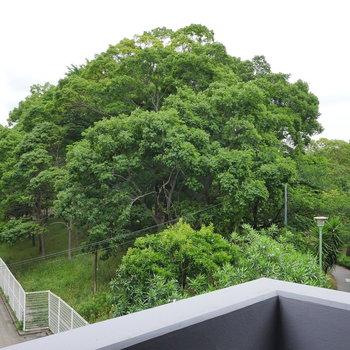 斜めを向いたら、大きな木。