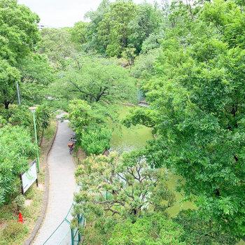 小窓からの眺望。公園の緑が癒し。