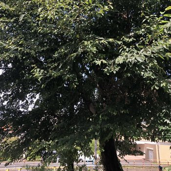 大きな木が生えていました。