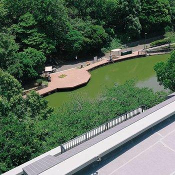 ここから公園の「ひょうたん池」が見えますよ。