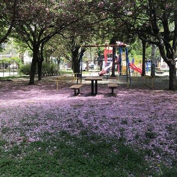 ここの桜は散った後も綺麗なんだ