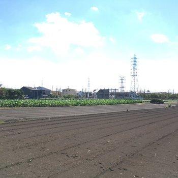 駅までの道沿いに、大きな畑が。のどかだ〜