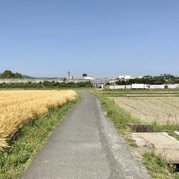 JR都府楼南駅までの道は突然この田舎!きめた、ここでランニングしよっと!
