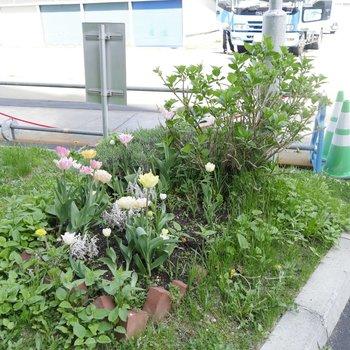 緑が豊か♪いたるところに季節のお花が咲いていますね◎