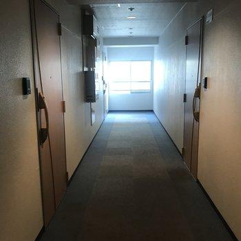 共用部はこちら、床はカーペット