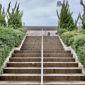 エントランスを出て、この階段を上がった先に駐車場と駐輪場。