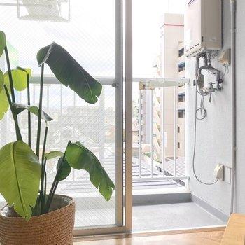 窓辺にはこんなふうにグリーンを飾って、癒やされたい。(※写真の小物は見本です)