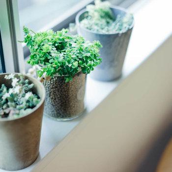 【インテリア参考例】腰窓には観葉植物を置いて育てるのもいいですね!