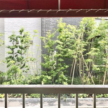 目の前は素敵な緑。表の窓は閉めて、部屋側の窓は開けておく、なんてできますよ。