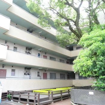 建物前の憩いのスペース。大きな木の下はとても気持ちい!