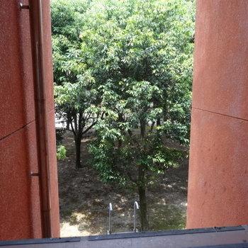 共用部から東公園の緑が見えます。