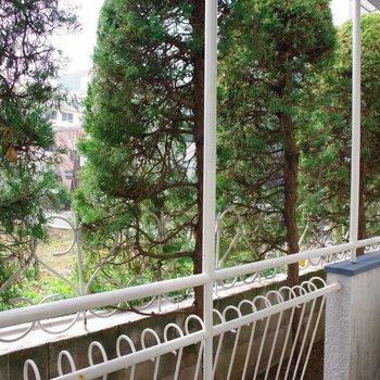 スギ科の針葉樹林。あー、軽井沢に行きたい。。