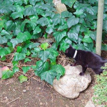 お、黒猫だ。散歩道のようですね