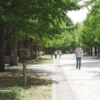 家から歩いてすぐ公園って、、なんて贅沢なんだ!