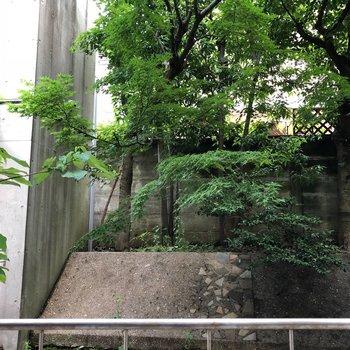 【上階】庭の緑が見えます