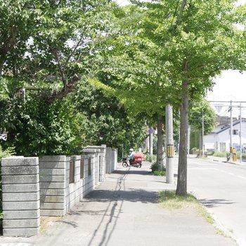 通りの前は、気持ちのいい並木道◎