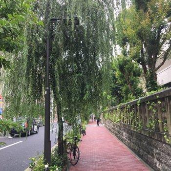 お部屋に来る途中に柳の木が。風流ですねぇ。