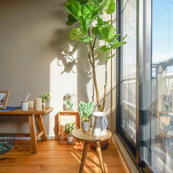 【イメージ】観葉植物置いちゃったりして