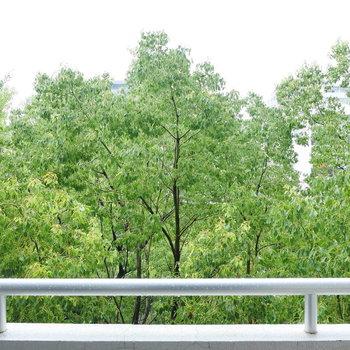 眺望は、目の前の公園の木です。