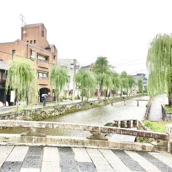 さらに柳並木がキレイな白川も。