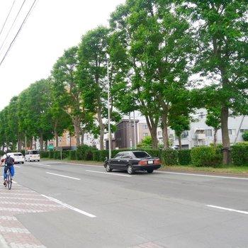 並木道が気持ちいい〜◎自転車で駆け抜けたくなります!