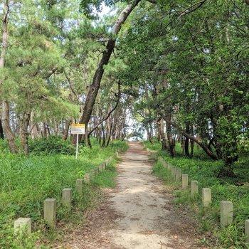 近くの松原はビーチへと続きます