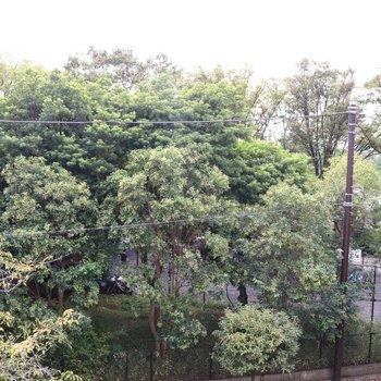 バルコニーから見える樹々