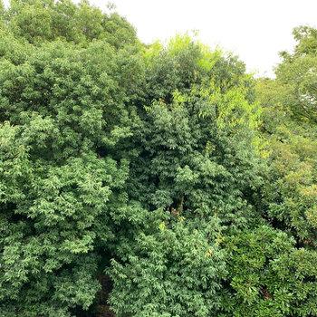 眺望は向かいの公園の木々。
