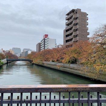 大横川沿いのお散歩、気持ちよさそう!