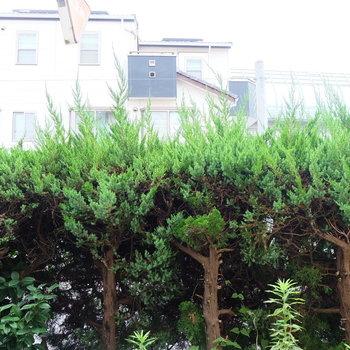 1階ですが、植木が目隠しをしてくれるので安心