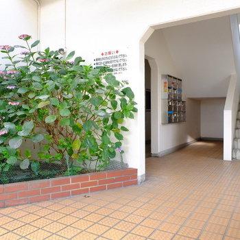 共用部の植木も整えられていて綺麗です。※前回募集時の写真です