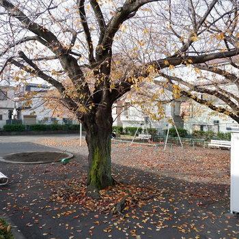 共用部から見える桜の木、春が楽しみになりますね