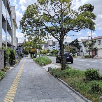 目の前の通りは広々きれいな道。