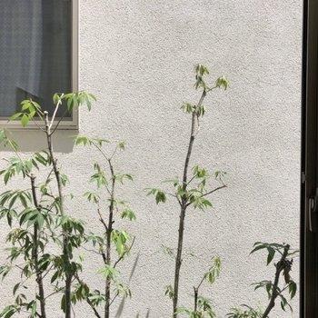 ロフト下の窓からの眺望。向かいの壁です。