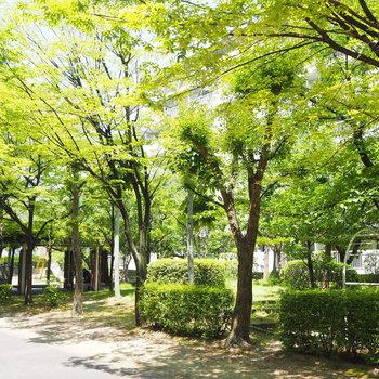 敷地内には公園が。いつでも来れますね◯