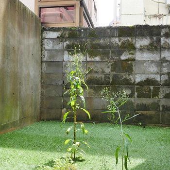 1階のメリット、専用庭!