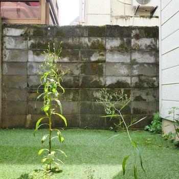 お庭です。