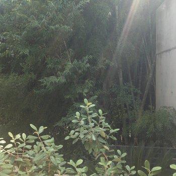 眺望は竹林。