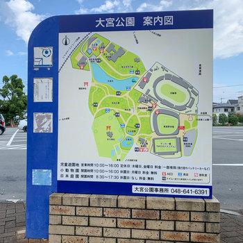 道路を挟んで向かいに大宮公園があります。