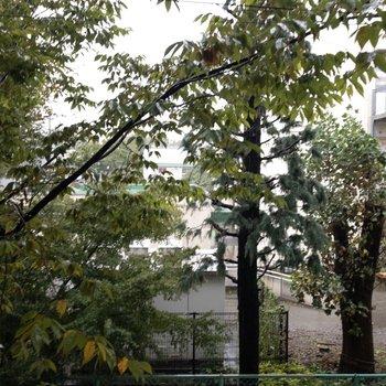 ベランダからは木々が見えます。