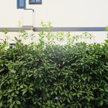 グリーンの壁がお隣の家との間に