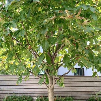 白い幹がかわいい木の眺望。ほんと癒やされる。