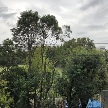 バルコニーからは向かい側の公園が見えました。