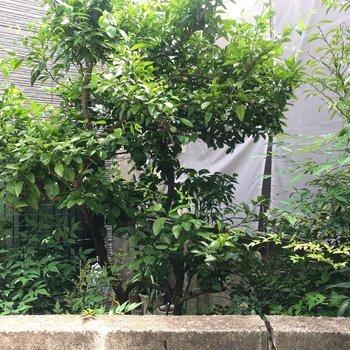 窓からはお向かいさんの植木が見えます。