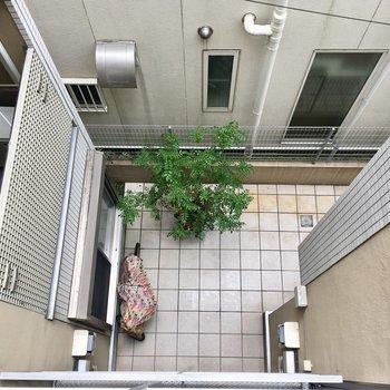 階段を見下ろすと中庭が見えます。