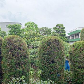 眺望は敷地前のグリーン。
