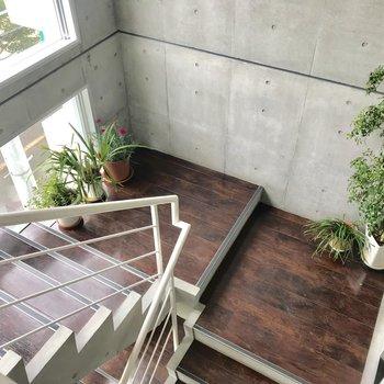 階段の所々に観葉植物が!