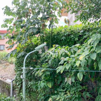 【1階バルコニー】眺望は向かいの小道と、グリーン。